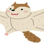 モモンガの名前の由来や英語の読み方について!