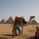 砂漠で生活するラクダはなぜ水を飲まないで生きていけるの!?