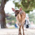鹿の赤ちゃんの大きさや特徴とは!?