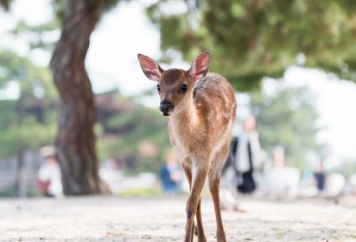 鹿 赤ちゃん 大きさ