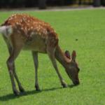鹿の赤ちゃん誕生!鳴き声はどう鳴く!?