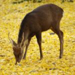 鹿の糞は肥料になる!?寄生虫は入っているの!?