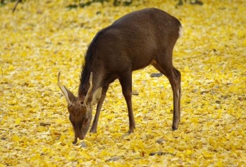 鹿 糞 肥料 寄生虫