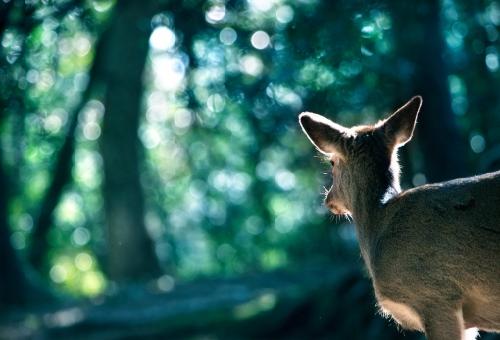 鹿 革 なめし方