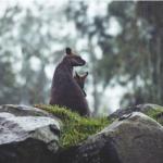 オーストラリアではカンガルーは駆除活動をしている!?