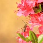 ハエと蚊とアブの違いとは!?