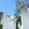 アブ 虫 冬 洗濯物