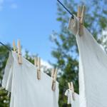 冬もアブは発生する!洗濯物に付く時の対策法は?!?