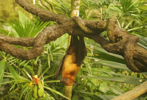 コウモリ 糞 匂い 対策