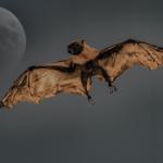 コウモリはなぜ空を飛べるの!?