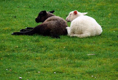 羊 数える 理由 効果