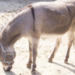 ロバと馬とポニーの違いとは!?