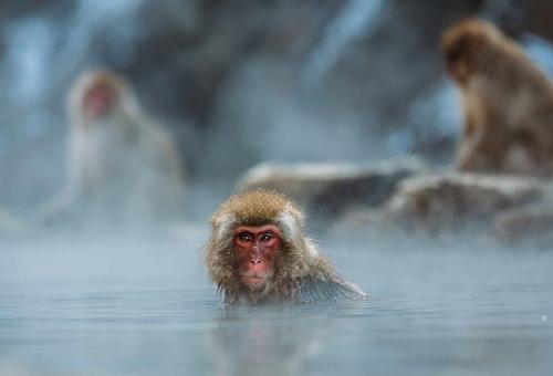 温泉 猿 理由