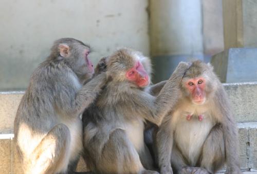 猿 可愛い 種類