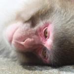 人間は猿から進化したと言われる理由とは!?