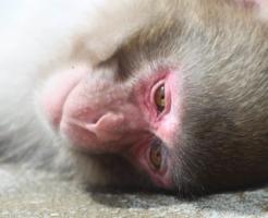 猿 人間 進化 理由