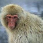 世界1大きい猿の種類は一体何!?
