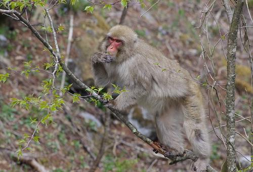 猿 野生 食べ物