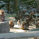 人気の動物!猿の種類とは!?