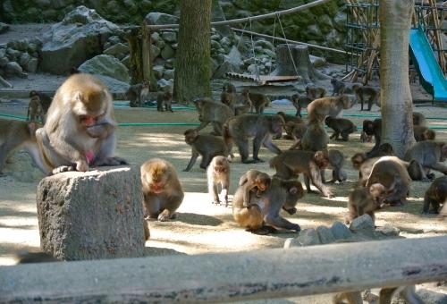 猿 動物 種類