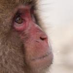猿の知能は高い!?人間だと何歳なの!?