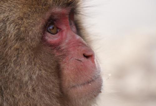 猿 知能 高い 何歳