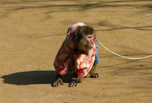 猿 トイレ しつけ