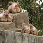 猿はペットとして飼いやすい?どんな性格をしているの?