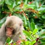 注意!野生の猿から感染する病気がある!?