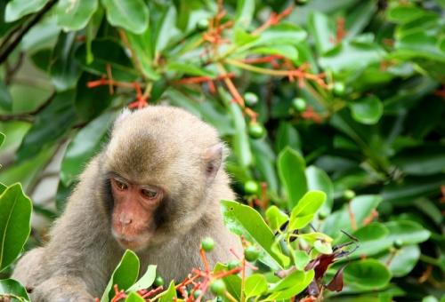 野生 猿 病気