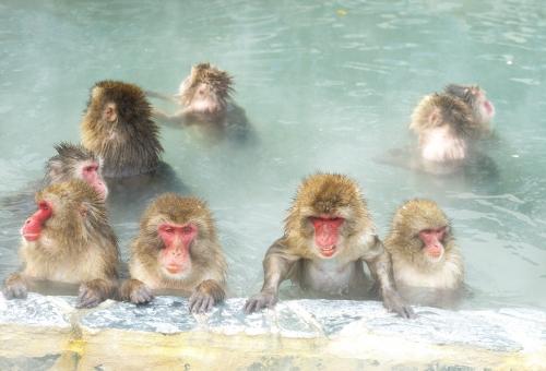 猿 温泉 なぜ