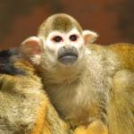 ペットの猿が噛む時の対策方法とは!?