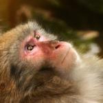 猿の寒い冬の時期の過ごし方について!