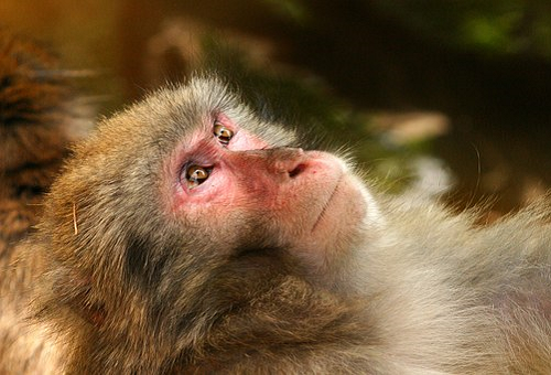 猿 冬 過ごし方