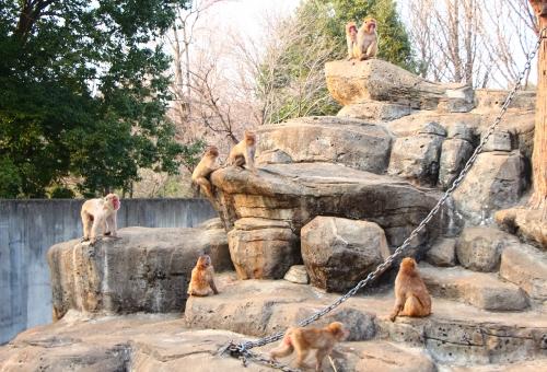 サル 群れ 構造 数