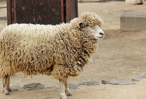 羊 意味 干支