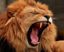 ライオン 鳴き声 種類 意味