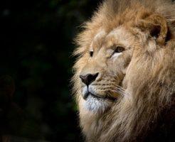ライオン 名前 由来 英語