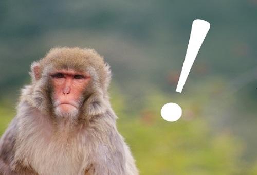猿 行動 意味