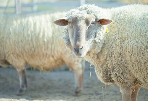 羊 腸 弦