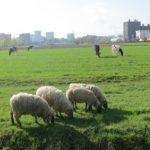 羊の革製品の経年変化について !