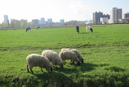 羊 革 経年変化