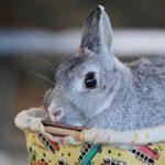 アンゴラウサギの値段や飼育方法について !