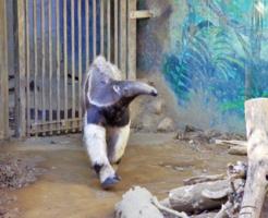 アリクイ 食事 動物園