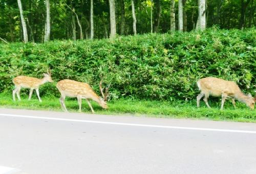 鹿 狩猟 時期 許可