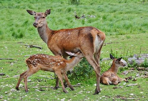 鹿 出産 時期