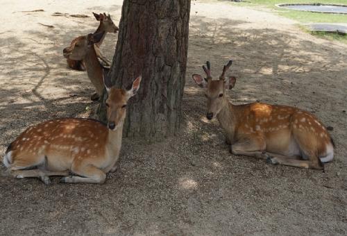 鹿 奈良 種類
