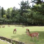 奈良公園にはなぜ鹿がいるの!?数はどれくらいいるの?