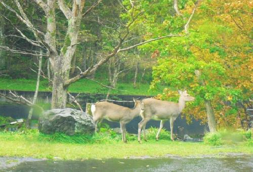 鹿 日本 増加 原因