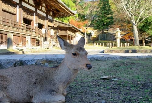 鹿 日本 歴史